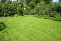groen gazon achtertuin 3