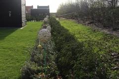beplanting-met-prunus-haag-2
