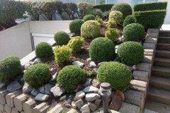 Buxusbollen-mooi