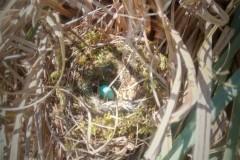 nest-gevonden-in-pampas-gras